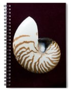 Seashell On Black Background Spiral Notebook