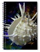 Seashell Spondylus Americanus Spiral Notebook