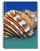 Seashell Wall Art 1 Spiral Notebook
