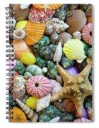 Seashells 3 Spiral Notebook