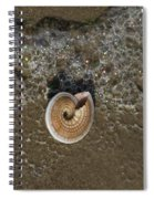 Seashells By The Sea Spiral Notebook