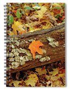Seashells In The Forest Spiral Notebook