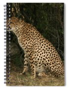 Seated Cheetah Spiral Notebook
