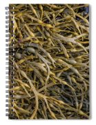 Seaweed On The Coast Of Iceland Spiral Notebook