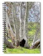 Secret Passageway Spiral Notebook