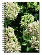 Sedum Autumn Joy - August Spiral Notebook