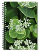 Sedum Pre-bloom Spiral Notebook