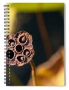 Seed Pod Spiral Notebook