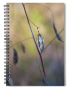 Seeds In A Pod Light Spiral Notebook