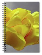Seeing Double - Tulip Spiral Notebook