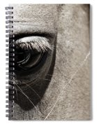 Stillness In The Eye Of A Horse Spiral Notebook