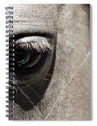 Stillness In The Eye Of A Horse Spiral Notebook