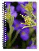Seeking The Day's Energy Spiral Notebook