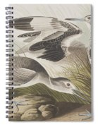 Semipalmated Snipe Or Willet Spiral Notebook
