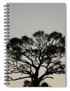 Senset Trees Spiral Notebook