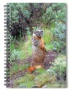 Sentry Spiral Notebook