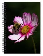 September Bee On Cosmos Spiral Notebook