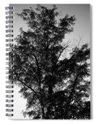 September Tree ... Spiral Notebook