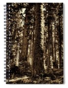 Sequoia Grove Along Crescent Meadow Loop Spiral Notebook