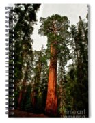 Sequoia In Kings Canyon Spiral Notebook
