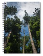 Sequoia Park Redwoods Reaching To The Sky Spiral Notebook