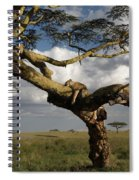 Serengeti Dreams Spiral Notebook