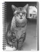 Serious Cat Model Spiral Notebook