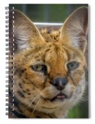 Serval Cat Spiral Notebook