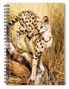 Serval Spiral Notebook