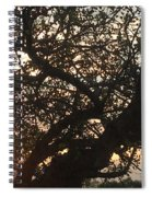 Setting Sun In Tree Spiral Notebook