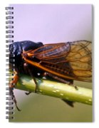 Seventeen Year Cicada Spiral Notebook