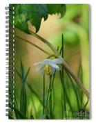 Shaded Mayapple Spiral Notebook