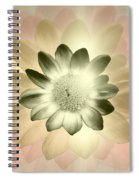 Shades Of A Daisy Spiral Notebook