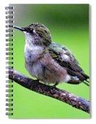 Shades Of Green - Ruby-throated Hummingbird Spiral Notebook