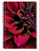 Shades Of Red - Dahlia Spiral Notebook