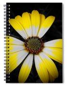 Shadow Around Crown Spiral Notebook