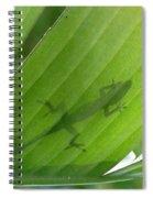 Shadow Lizard Spiral Notebook
