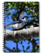 Shadowy Blue Jay Spiral Notebook