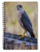 Shakerag Coopers Hawk Spiral Notebook