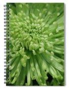 Shamrock Spider Mum Spiral Notebook