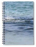 Shark Catching A Fish Spiral Notebook