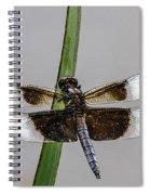 Sharp Focus Dragonfly Spiral Notebook