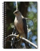 Sharp Shinned Hawk Spiral Notebook