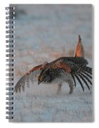 Sharptail Grouse On Snow Spiral Notebook