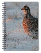 Sharptail On At Sunrise Spiral Notebook