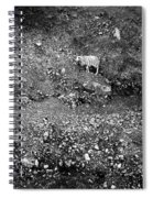 Sheep In Bw Spiral Notebook
