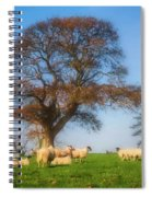 Sheep In Somerset - Impressions Spiral Notebook