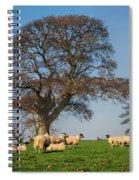 Sheep In Somerset Spiral Notebook