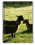 Sheep In The Sunlight Spiral Notebook