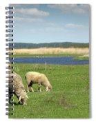 Sheep On Pasture Nature Farm Scene Spiral Notebook